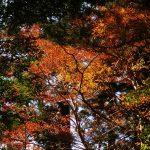 晩秋な縄文杉☆