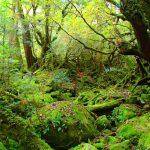 森の静けさを楽しむ。