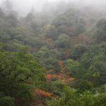 やさしい雨の森で☆