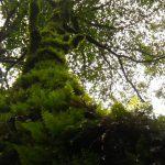 静かな森で過ごす時間☆
