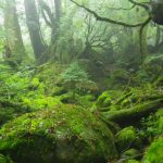 コケ日和に森あるき☆