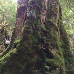 コケの喜ぶ森を歩く