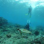 初めての体験ダイビングは屋久島で♪