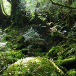 キラキラと光るコケの森☆