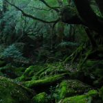 早朝の苔むす森☆
