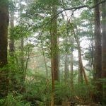 青空と霧の縄文杉☆