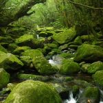 春の気配漂うコケの森☆