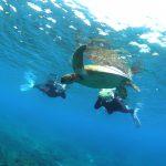 念願のウミガメと一緒にシュノーケル~♪
