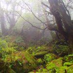 霧と緑の世界へ。