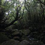 連休明けの静かな森へ