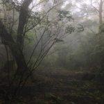 美しく濡れる森