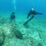 初ダイビングはウミガメと一緒に♪