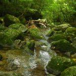 快適な沢沿いの苔の森☆