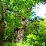 静かで快適な森で。