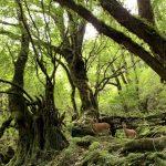 美しい苔の森とそこに住む生きもの