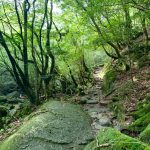 午後の静かな森