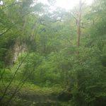 潤う森の縄文杉☆