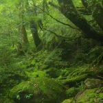 到着からすぐのコケの森☆