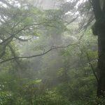 幻想的な縄文の森で☆
