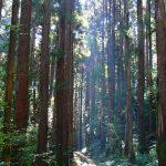 秋めく森を楽しむ。