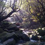 暖かい冬の苔むす森☆