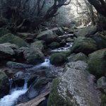 賑わいはじまる苔の森☆