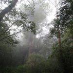森は白く、雨止まず。