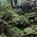 今日の苔むす森