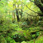 緑の森で。