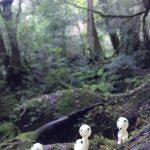 澄んだ空気の森へ