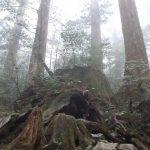 雨と霧と縄文杉☆
