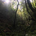 貸切の苔むす森へ