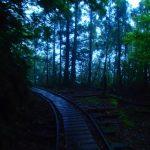 静かに佇む森の中。