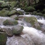 増水する森で☆