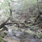 贅沢に森と川遊び☆