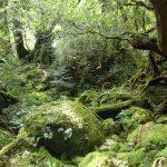 夏、森で水と戯れる。
