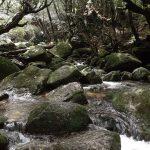 雨と晴れと苔の森☆