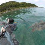 シュノーケルポイントは透明度?それともウミガメ?
